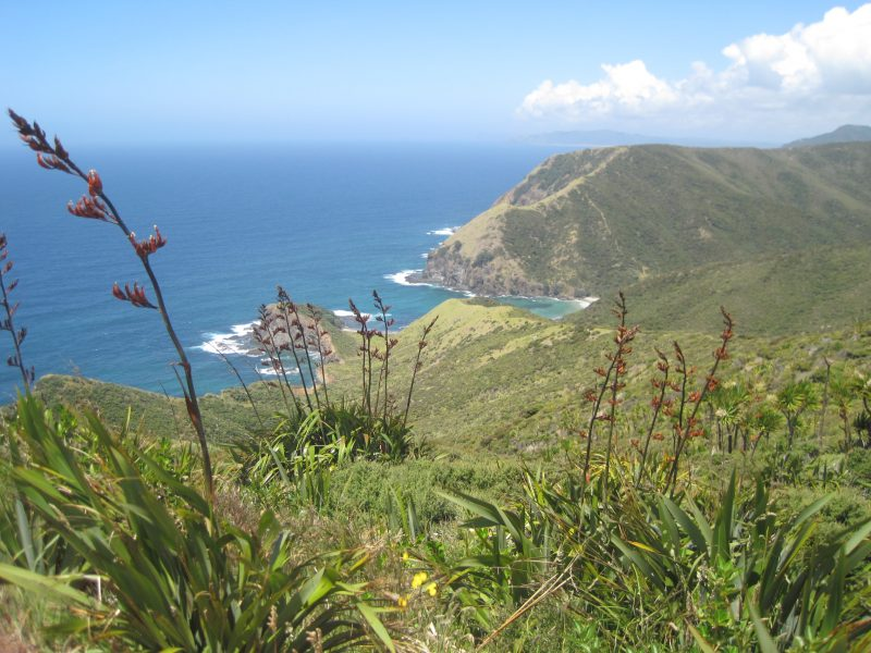 Sänna - North Cape, New Zealand