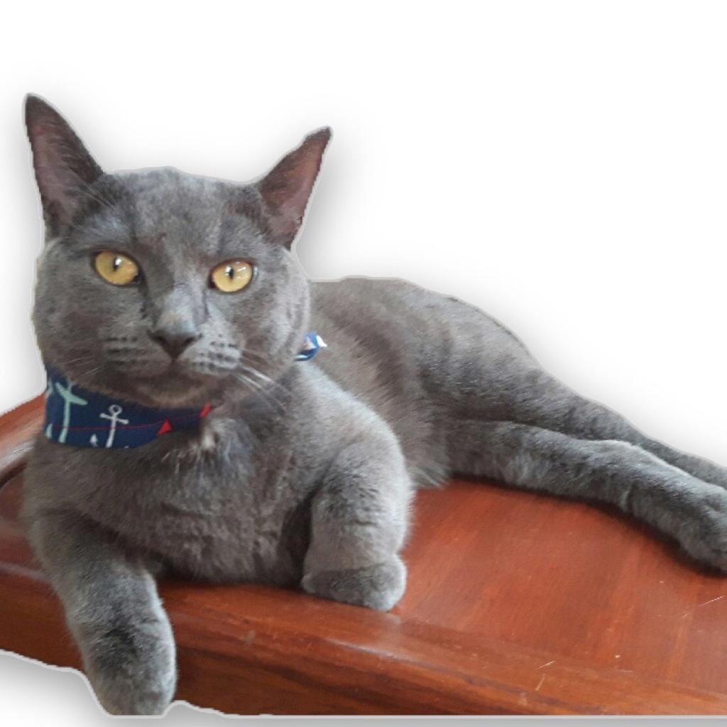 Nellie, Sänna's ship's cat