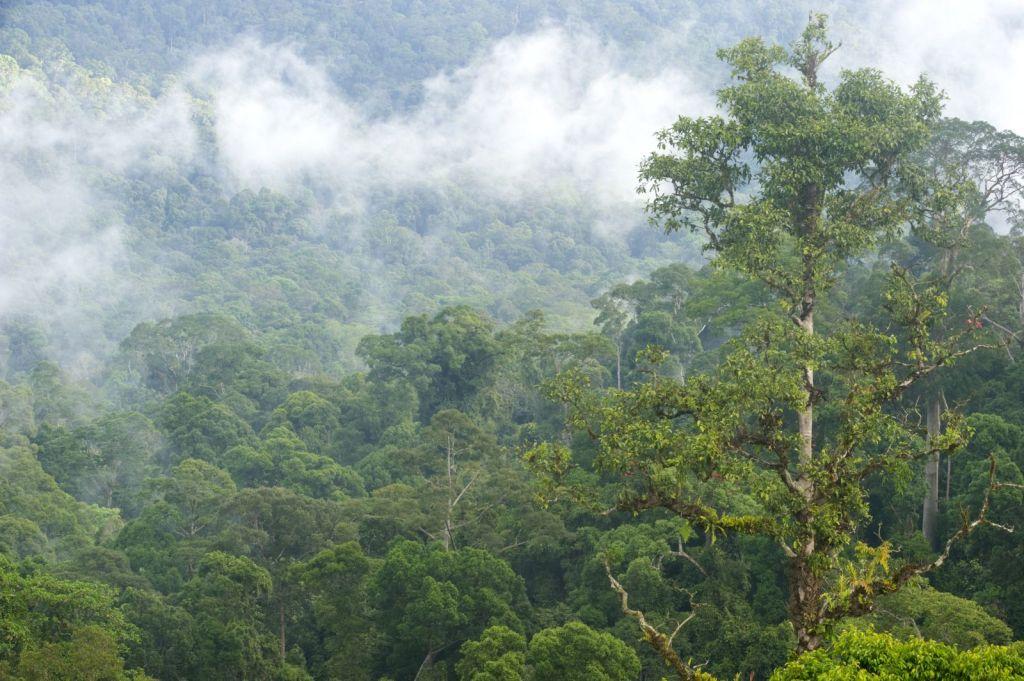 Sänna Borneo